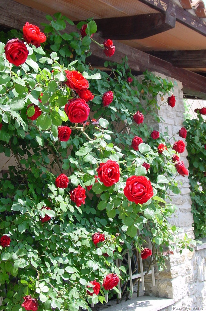 http://floweradm.narod.ru/images/vush.jpg
